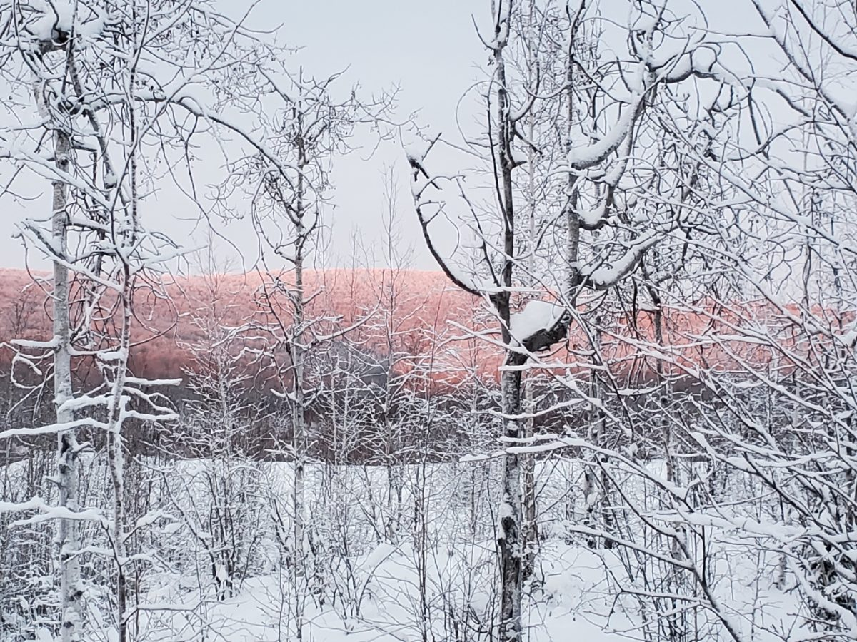 snow-covered trees and hill